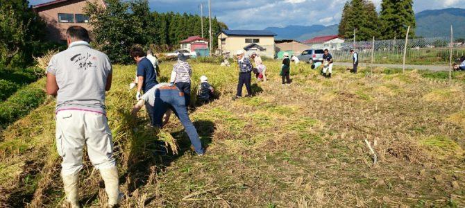 幻の米「さわのはな」稲刈りツアー(9/18-19開催)