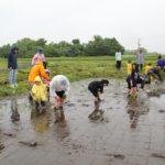 山形県新庄市,農業,農作業体験,さわのはな,田植え体験