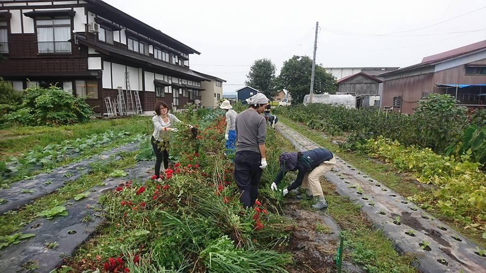山形県新庄市,農業体験,さわのはな,カフェスロー