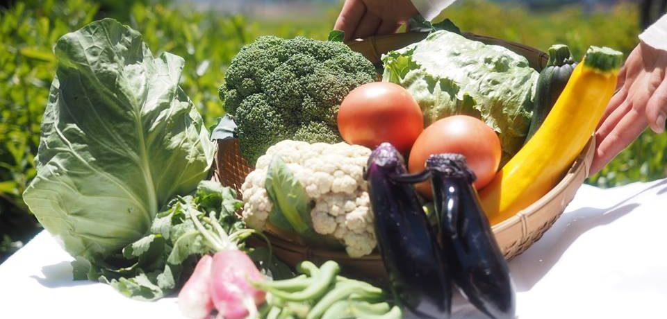 野菜ソムリエが作る野菜ボックスはいかが?