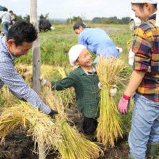 稲刈りイベント「秋の大収穫まつり」