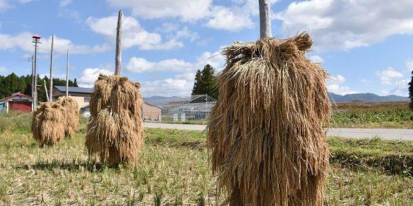 農業体験で風景が変わる