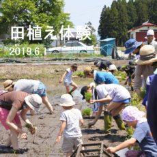 明倫堂の田植え体験2019